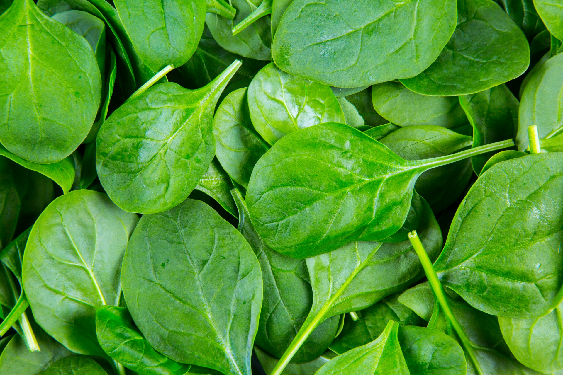 Health Benefits Of Spinach Old Mill